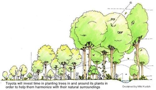Toyota sázení stromů