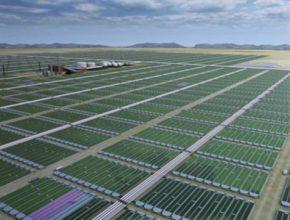 průmyslové pěstování řasy