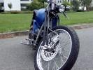 Blue Elyctra