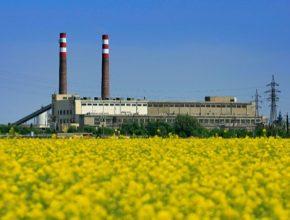 Biomasa Hodonín pole řepka olejná